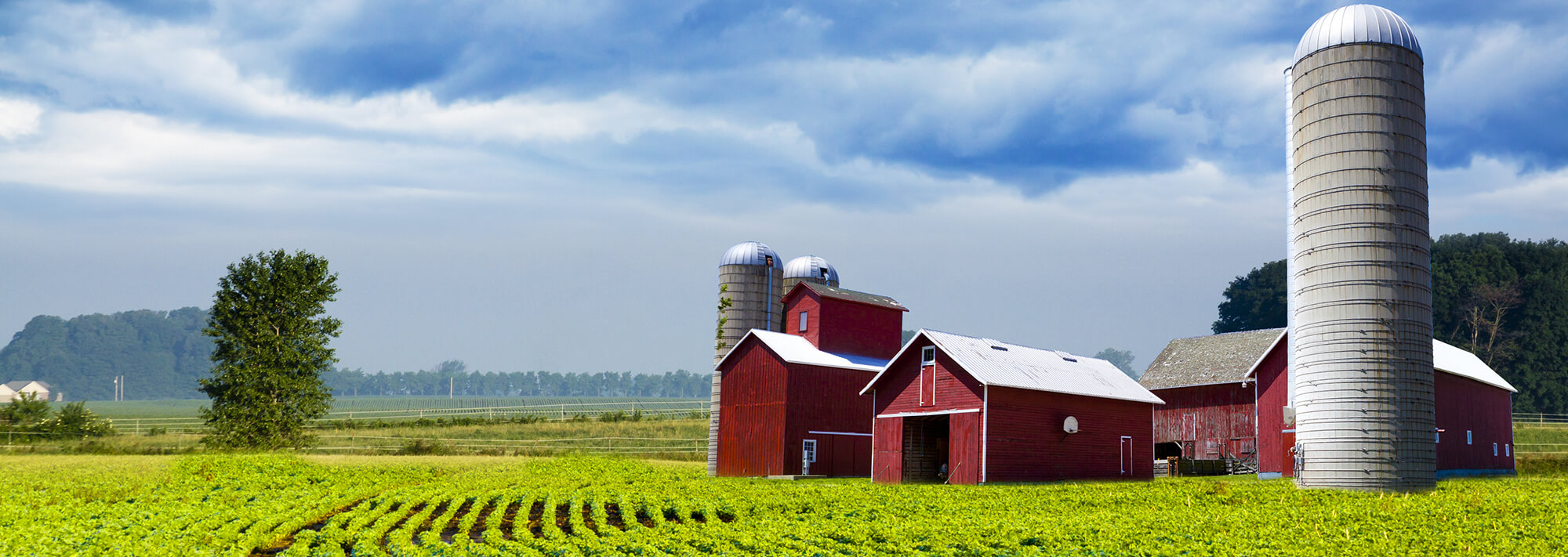 Rural family farm in central Minnesota with a red barn, red outbuildings, and multiple silos